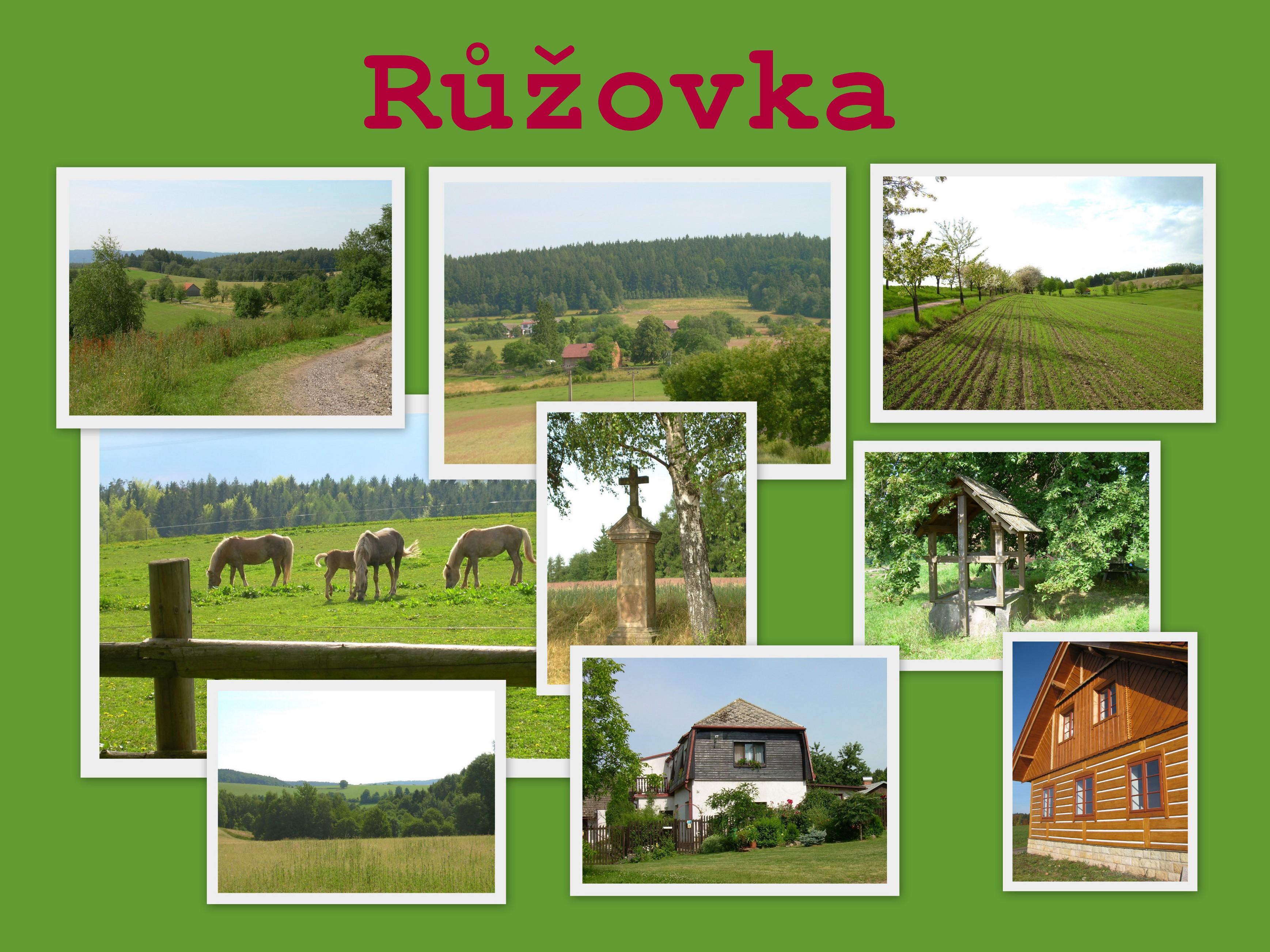 OBRÁZEK : -_ruzovka_kolaz.jpg